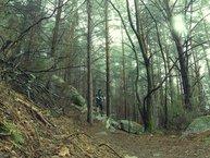 Merrell Agility Peak Flex: Merrell Agility Peak Flex: los terrenos técnicos secos y bosques son donde más cómodos hemos corrido